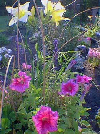 H m rocalles mon coin de jardin for Carte virtuelle mon coin de jardin